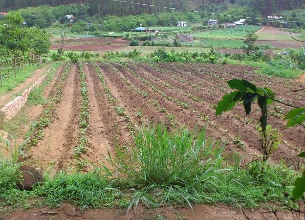 Bán đất Nông Nghiệp ở Huế khu vực sinh lời cao nhất